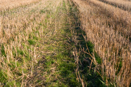 Closeup of drying green grass moss hay field macro of textured eco natural backdrop bulgaria organic autumn fall foliage wallpaper view top above 免版税图像