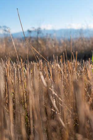 Hay straw field golden close-up beautiful summer rural sun landscape bulgaria perspective creative