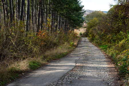 Natural looking autumn forest high symmetrical tree trunks path road with lots of copy space for text