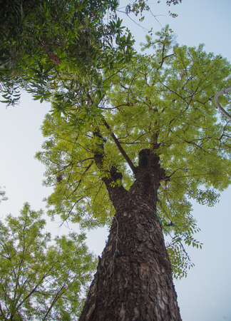 big: Big tree Stock Photo