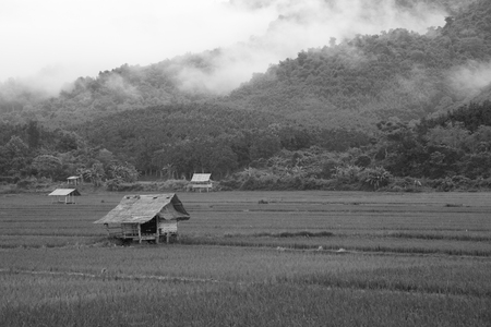 Black and white of Cottage and Green Terraced Rice Field in Laos