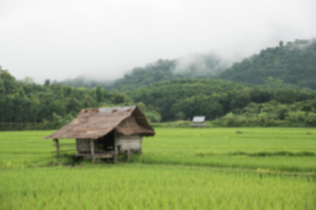 Cottage and Green Terraced Rice Field in Laos