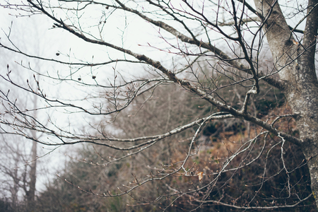 mediterranean forest: Branche with young leaves. Mediterranean forest