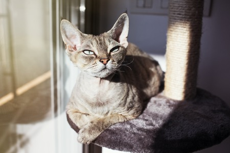 scratcher: Cat loves to spending time sitting on scratching post with lounge space. Multi Platform Cat Scratcher. Cat enjoys to have sun baths. Cat furniture - scratcher