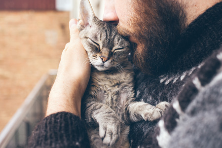 Close-up of beard man in icelandic sweater who is holding and kissing his cute purring Devon Rex cat. Muzzle of a cat and a mans face. Love cats and humans. Relationship, weasel. Stock Photo