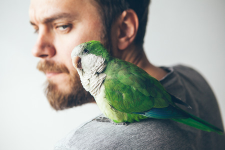 Close-up of young beard man with his pet Quaker parrot on shoulder at home. Monk parakeet is looking at camera with curiosity.