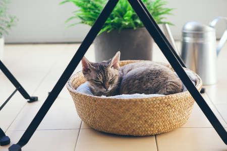 Devon Rex cat is sleeping in the basket under the table on the balcony. Balcony is decorated with green plants