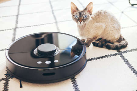 Modern vacuum cleaner with in-built camera and smart sensor technology is cleaning white carper in living room. Selective focus. Devon rex cats sits next to vac robot