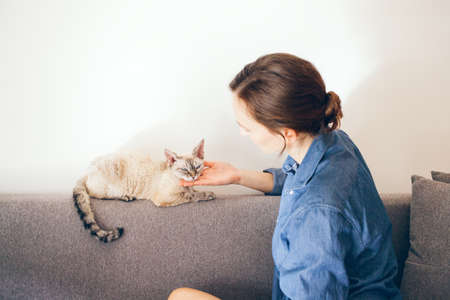 Woman is petting cute cat after busy work day to tackle stress and improve mood. Cat is purring and is happy to spent time with owner. Woman is cuddling, playing, hanging out with her Devon Rex kitty.