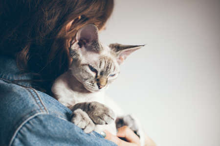 Woman is holding in hands and hugging color point color Devon rex cat. Kitten is purring and feeling happy with the owner. Selective focus white wall background, natural light. Copy space area