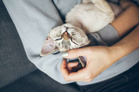 Close up of Devon Rex cat in girls arms is feeling happy, relaxed and purring. Petting cute and sleepy kitty. Domestic animals.