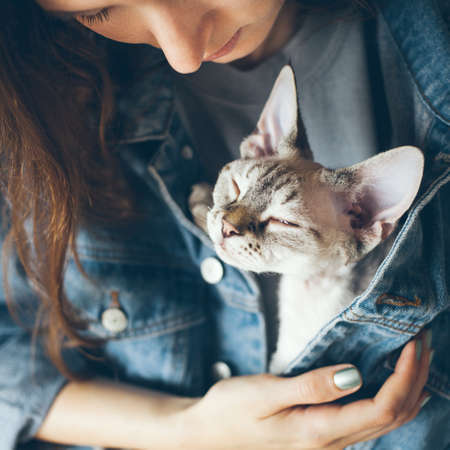 Woman in blue jeans jacket is holding cute purring Devon Rex kitten. Cat is feeling happy and safe together with its owner. Selective focus