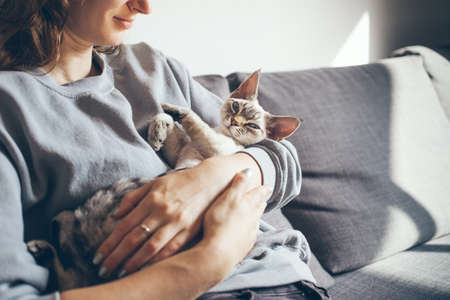 Close up of a woman in casual clothes sitting on the sofa at home and holding cute sleepy Devon Rex kitten. Cat is feeling relaxed and happy with owner. Selective color Standard-Bild