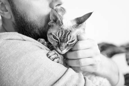 Close-up of beard man who holds his cute purring Devon Rex cat. Muzzle of a glad and happy cat. Love cats and humans. Standard-Bild