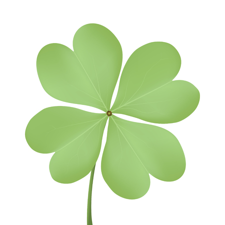 Realistic four-leafed clover on a white background. Vector illustration