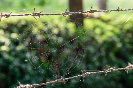 spiders web: Spiders web at barbed Wire