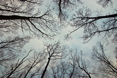 Branches from an old trees. Can be used in so many ways! Great for backdrops, backgrounds, design element. Stock Photo