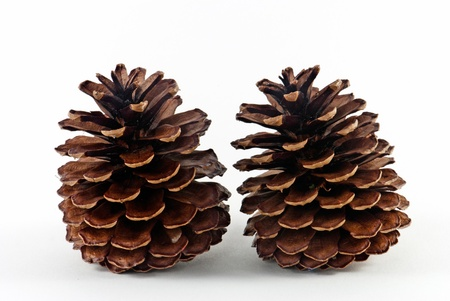 Detail of two pine cones photo