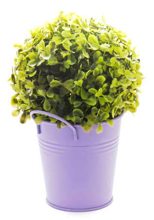 lila: Decorative tinny planter with flower Stock Photo