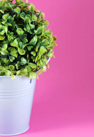Image of tinny planter with flower on pink background Stock Photo - 12324953