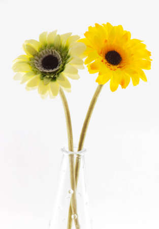 Picture of two gerbera in the vase Stock Photo - 12719188