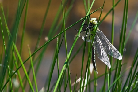 Close up dragonfly on top of the grass by lake