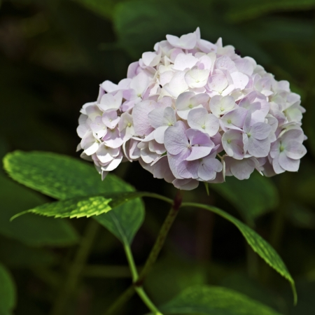 Close up pink and white flower Stock Photo - 15797625