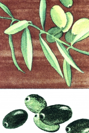 Green olives on branch. Illustration. illustration