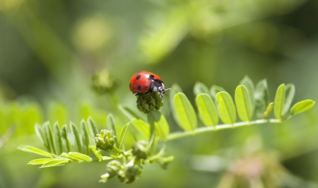Ladybird crawling on the green plant  photo