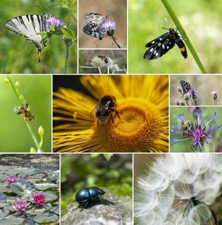 Collage de insectos y flores photo