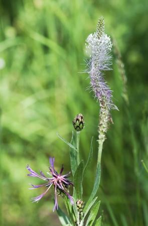wilting: Floraci�n y marchitamiento en el prado Foto de archivo