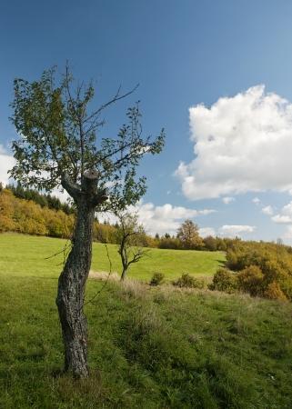 truncated: Truncated tree on an autumn meadow.