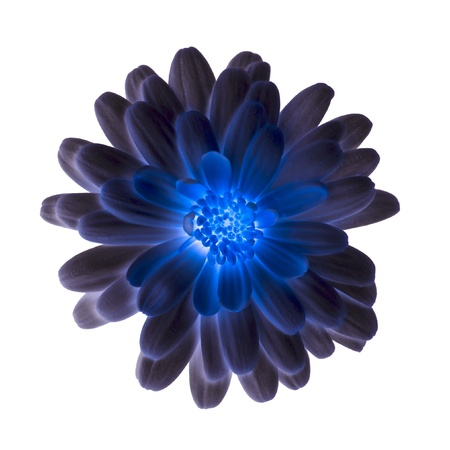 blue flower: Shiny blue flower isolated on a white background. Stock Photo