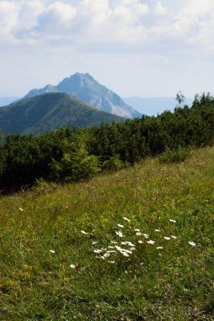 Tourist photo. Big Rozsutec (Velky Rozsutec), Mala Fatra mountain, Slovak republic - in the background. Stock Photo