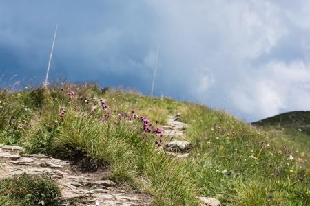 prato montagna: Prato fiorito di montagna e si avvicina tempesta.