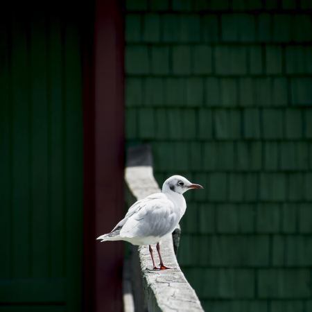 standpoint: Lonely seagull sitting on a handrail.