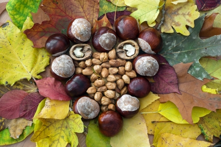 Autumn heart of horse-chestnuts, walnuts and hazelnuts lying on the colorful leaves. photo
