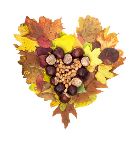 hojas de colores: Coraz�n del oto�o de casta�as de Indias y avellanas que mienten en hojas de colores. Objeto aislado. Foto de archivo