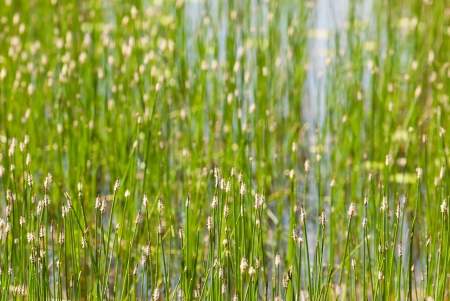 Spring green grass in the lake. Stock Photo - 24224027