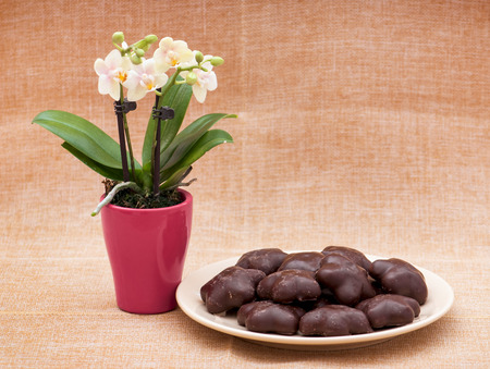 Orchid flower and gingerbread cookies on the table. photo