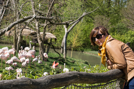 caucasian woman: Young caucasian woman posing with flamingos in a zoo.