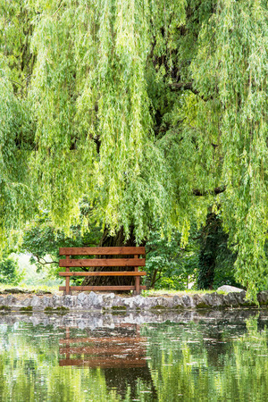 Wooden bench and weeping willow (salix babylonica) are mirrored in the lake. Stock Photo