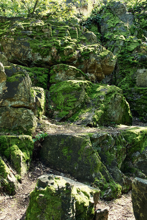 blanketed: Rocks overgrown with moss in the forest. Stock Photo