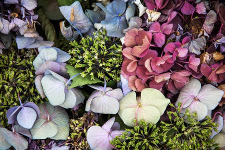 fiori secchi: Decorativi fiori secchi. Sfondo naturale.