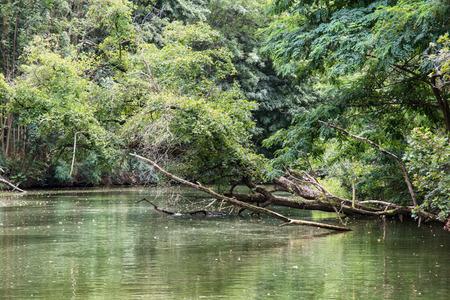 flowing river: Bosque inundable verde en el sur de Moravia, Rep�blica Checa, Europa. R�o que fluye.