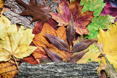 variability: Colorful autumn leaves and tree bark. Seasonal natural background. Stock Photo