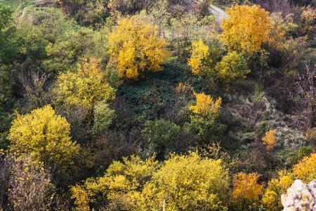 autumn forest: Alberi colorati in autunno foresta. Tema naturale.