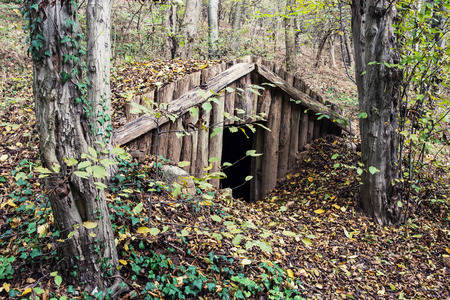 dugout: Old dugout in the deciduous forest.