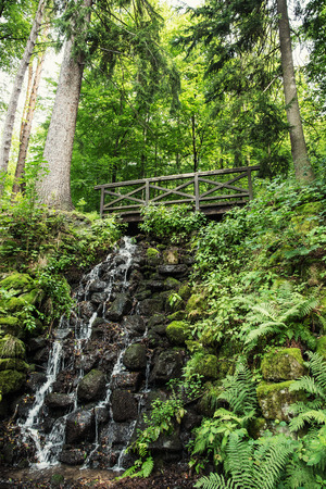 Wooden bridge and waterfall with fern plants in european forest. Natural theme. photo