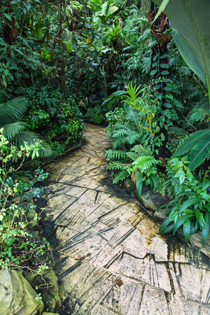 Trekking trail in the jungle. Natural background. Vertical composition. photo